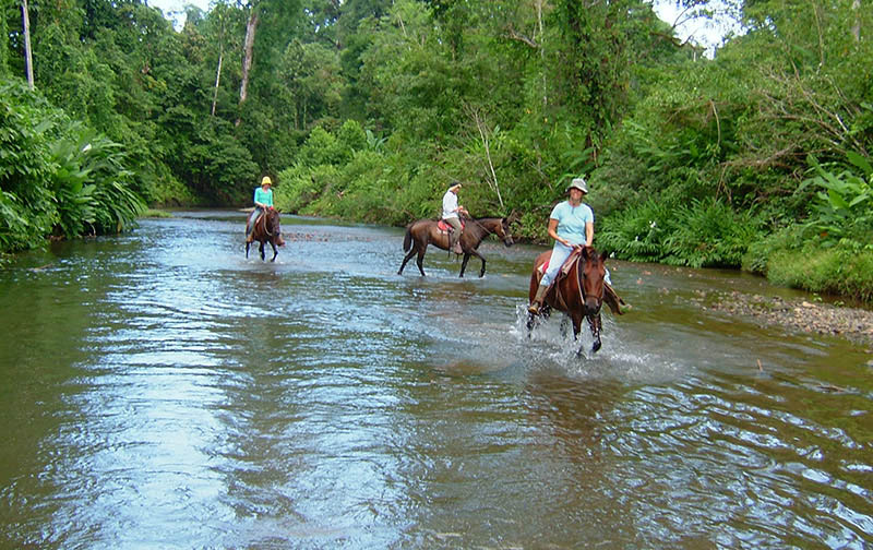 Horse Back Riding Tours in Drake Bay, Osa Peninsula