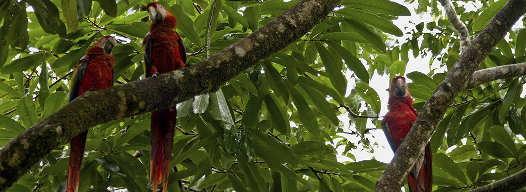 Birdwatching Tour at Drake Bay, vacations in costa rica