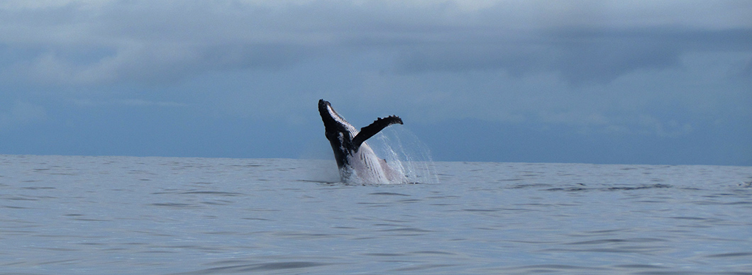 Dolphin and whale watching at Drake Bay, vacations in costa rica