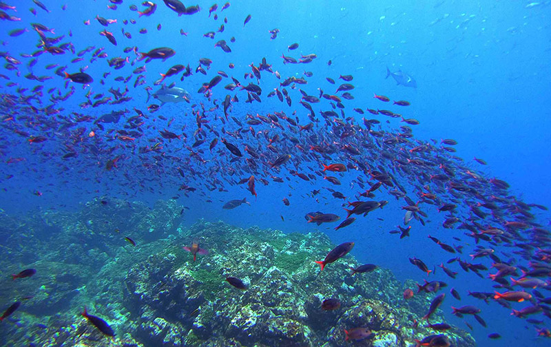 Scuba Diving in Drake Bay, Osa Peninsula